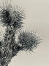 Dry Thistle Flower