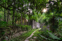 Ruins Of Abandoned Jungle Vill...