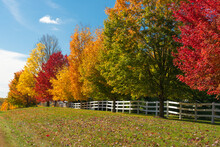 Multiple, Bright Colored Trees In A Row Against A White Fence In Autumn