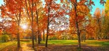 Autumn Forest Landscape. Gold ...