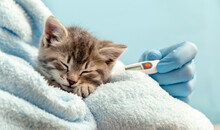 Ill Baby Cat Tabby Kitten On B...