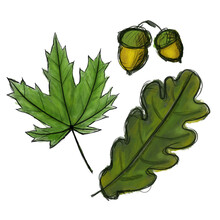 Set. Digital Sketch Maple And Oak Tree Leaves And Acorn. Black Doodle Outline And Green Colored Foliage, Yellow Nut With Cap Isolated On White. Watercolor Imitation Dark And Light Colors With Stains.