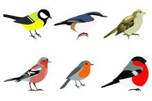 Set Of Birds: Sparrow, Chaffinch, Bullfinch, Great Tit, Nuthatch, Robin Vector