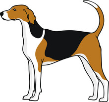 Simple Vector Of American Foxhound