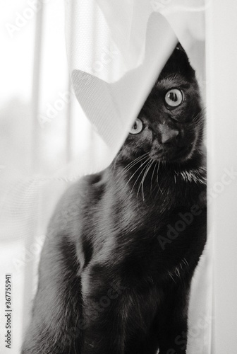 Canvastavla Greyscale vertical shot of a cute black cat sitting by the window