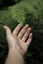 Shallow Focus Shot Of A Hand A...