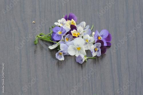 Fototapeta Viola tricolor...Fiołek trójbarwny fotoobraz z fiołków obraz