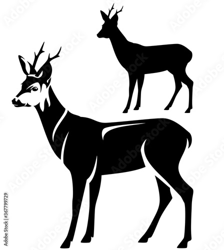 Fotografia standing roe deer male animal side view black and white vector outline and silho