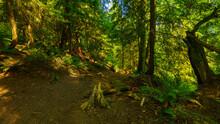 Shared Bc Hiking/biking Trail ...
