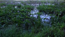 A Landscape Footage Of A Swamp...