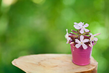 Wooden Stump With Saponaria Flowers In A Bucket On A Green Sunny Bokeh Background. Text Space.