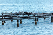 Seagulls On A Wooden Pier аga...