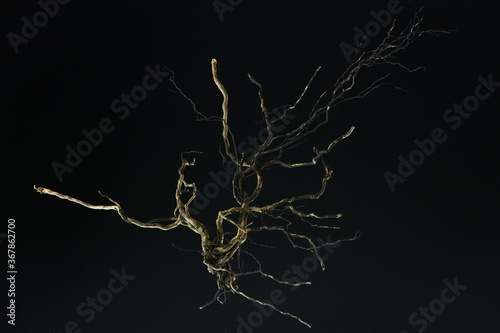 Fotografering Root of tree isolated