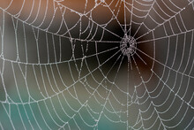 Water Drops In A Spider Web