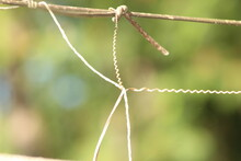 Close Up Of A Rope On A Branch