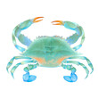 canvas print picture - Watercolor illustration of blue colorful crab. Hand drawn. Isolated on white