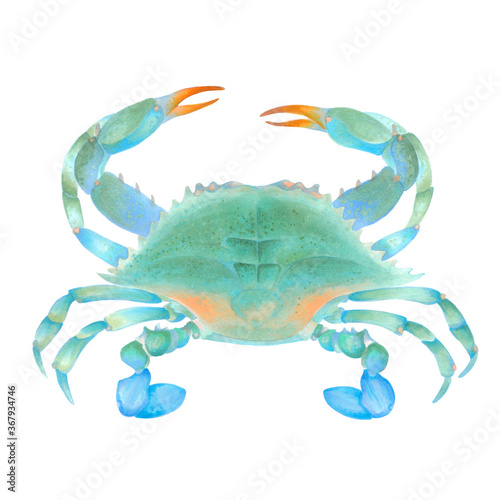 Watercolor illustration of blue colorful crab Canvas Print