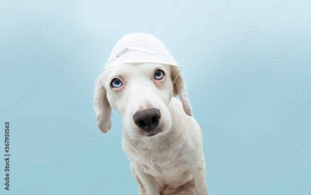 Puppy dog wearing protective face mask in a wrong way. healthy concept. Isolated on blue background.
