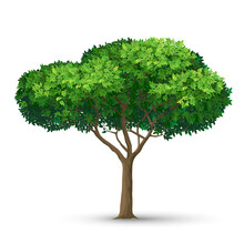 A Tree With A Dense Crown And Green Leaves. Detailed Vector Illustration Isolated On White Background.