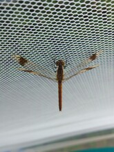 Dragonfly On The Grid