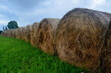 Freshly Rolled Straw Rolls In The Green Meadow, Close-up. Round Bay Bale Rolls In A Green Field