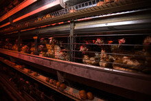 Poultry Farm. Modern Farming