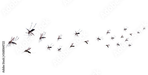 Obraz na płótnie Flying mosquitoes isolated on white background