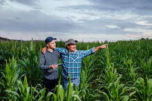 Son And Father, Farmers Standing In A Corn Field With Tablet, Looking And Pointing Away, They Are Examining Corp At Sunset