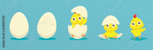 Fotografia Chicken hatching from the egg