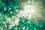 Fototapeta Kawa jest smaczna - New fresh leaves on green spring background