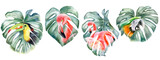 Double exposure of monstera leaves and tropical birds isolated on white background. Toucan, flamingo, parrot, macaw. Set.  Hand painted watercolor illustration. Realistic botanical art. Template