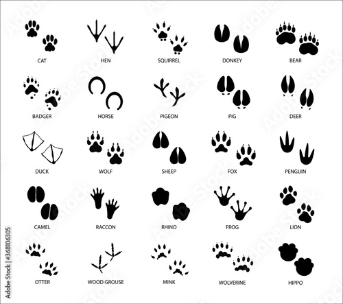 Set of different animals and birds silhouette tracks with description isolated o Poster Mural XXL