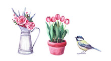 Watercolor Flower Arrangement In A Pitcher, Tit Bird And Tulips In Pot. Farm And Garden Interior Decoration