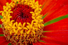 Macro Photo Of The Center Of The Flower With Stamens And Pollen