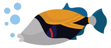Reef Triggerfish, Illustration, Vector On White Background