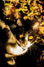 Gato Bajo El Sol