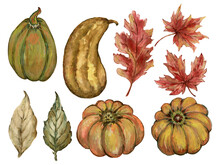 Watercolor Gouache Autumn Fall Pumpkin Gourd Squash Branches With Leaves Hand Drawn Illustration Element Design