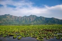 Kashmir Lake Dal With Floatin...
