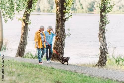 Obraz Selective focus of smiling senior woman walking near husband and pug dog on leash in park during summer - fototapety do salonu