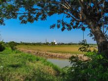 タイ、アユタヤ歴史公園のワット・プーカオトーンの田園越しの遠景 / Distant View Of Wat Phukhao Thong Of Ayutthaya, Thailand