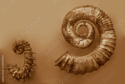 photo of a halved backlit  shell of a chambered nautilus (Nautilus pompilius) isolated on white Canvas-taulu