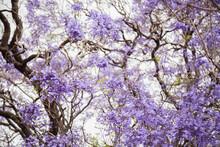 Selective Focus On Purple Flow...