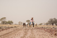 Girl Rider And Horses In Dust ...