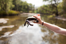 Close Up Of Hands Holding A Turtle