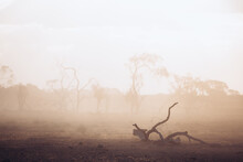 Tree Branch In The Dust On Ground In Paddock