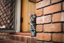 Kitten Sitting In A Doorway
