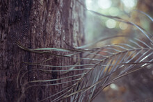 Tree Frond And Trunk In Forest
