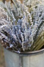 Dried Lavender In Bucket