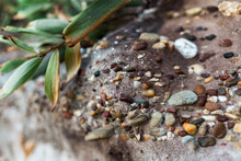 A Close Up Of Small, Colourful Pebbles, Naturally Embedded In A Sandstone Rock Structure.