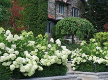 Garden With Large Cluster Of W...